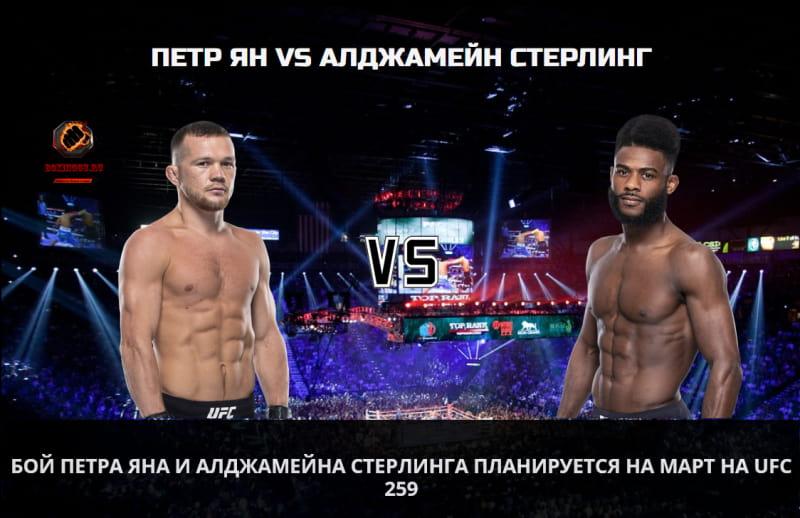 Бой Петра Яна и Алджамейна Стерлинга планируется на март на UFC 259